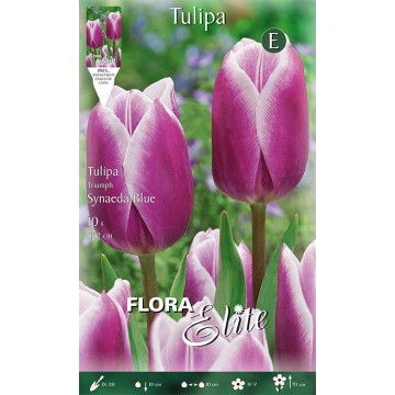 Tulipano Synaeda Blue