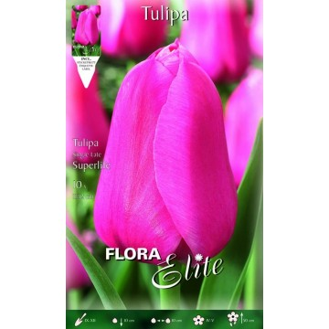Tulipa Superlife