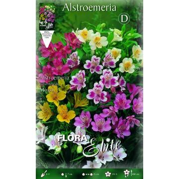 Alstroemeria Mixed