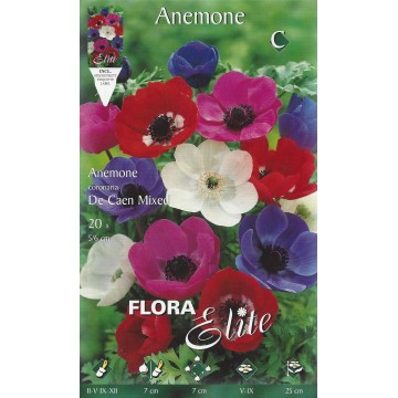 Anemoni De Caen Mix