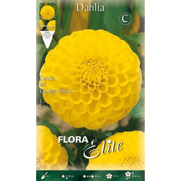 Dhalia Golden Torch