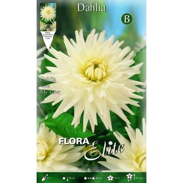 Dhalia My Love