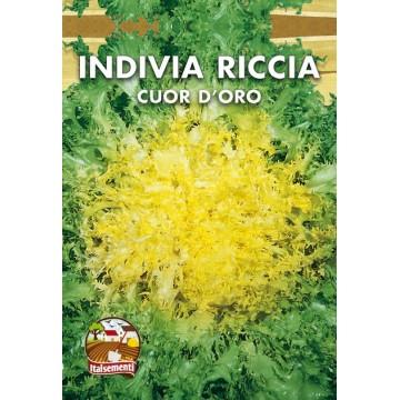Indivia Riccia Cuor d'Oro