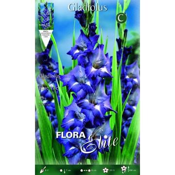 Gladioli Blue Isle
