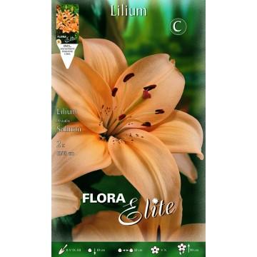 Lilium Asiatico Salmone