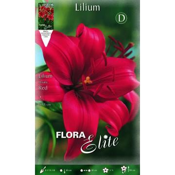 Lilium Asiatico Rosso