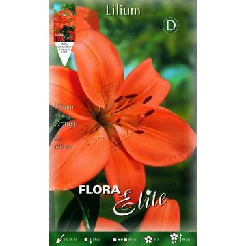 Lilium Asiatico Arancione