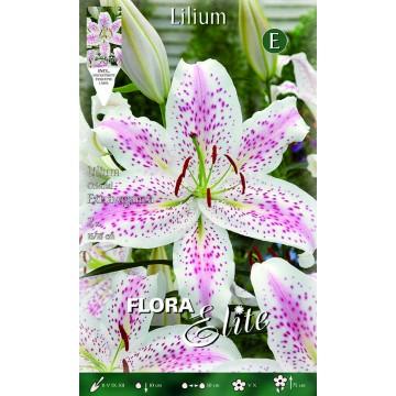 Lilium Orientale Extravaganza