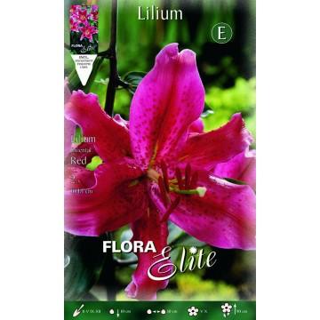 Lilium Orientale Rosso
