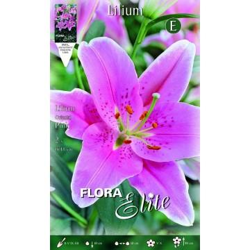 Lilium Orientale Rosa