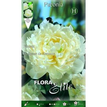 Paeonia Duchesse Nemours