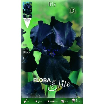 Iris Giaggiolo Nero