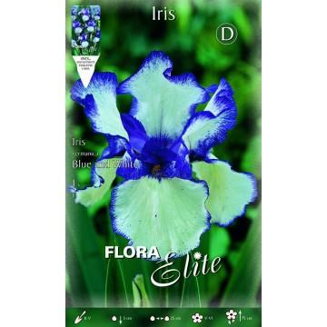 Iris Giaggiolo Blue Bianco