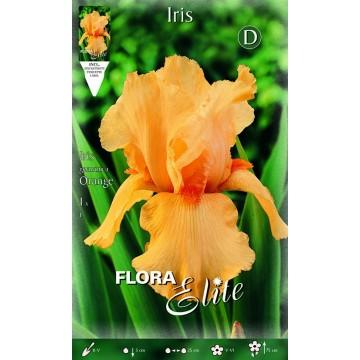 Iris Giaggiolo Arancione
