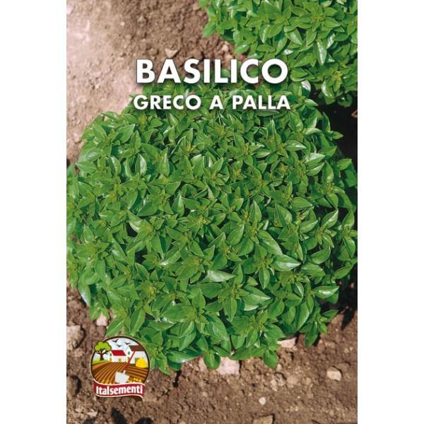 Basilico Greco a Palla