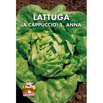 Lattuga Cappuccio S. Anna